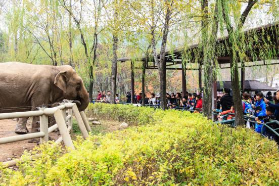 """方林集团""""关爱孤独症儿童 圆梦森林动物园""""秋游活动温馨结束"""